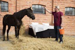 elite med häst